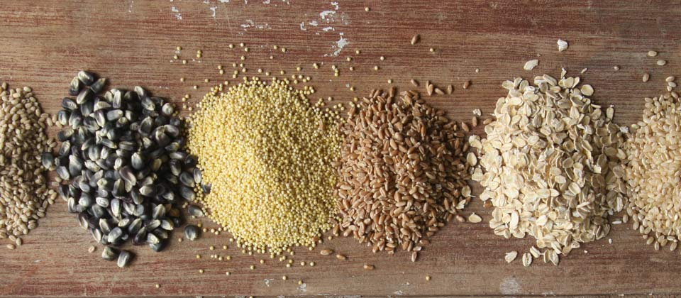 photo of grains- oats, corn, barley, wheat, millet